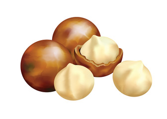 Nuts of Macadamia.