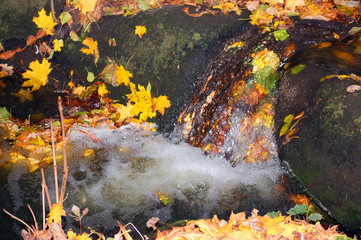 autumn leaves in a small waterfall