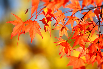 Herbstlaub4