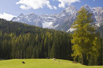 Grüne Weidewiese in den Bergen.