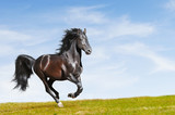Black horse rung gallop on freedom