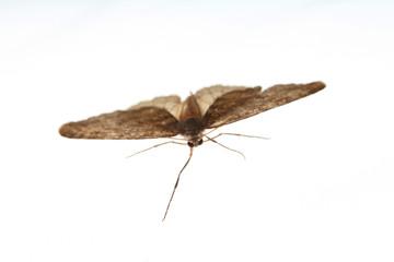 Motte im Anflug