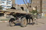 donkey cart in Egypt
