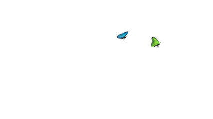 Colorful butterflies fly tough the screen, ideal ending scene