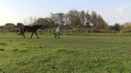 jeune fille et son poney