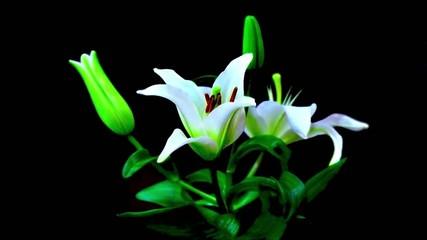 Time lapse fleur de Lys