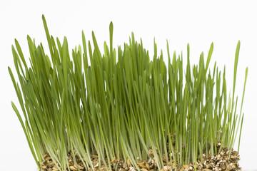 green grass and seeds