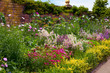 English Herbaceous Garden Border - 36351891