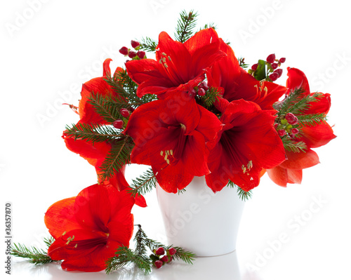 Christmas arrangement of amaryllis