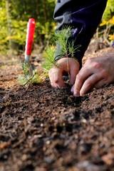 Men planting a tree