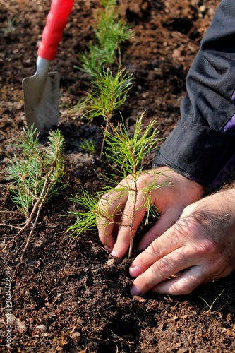 Hands planting a new forest