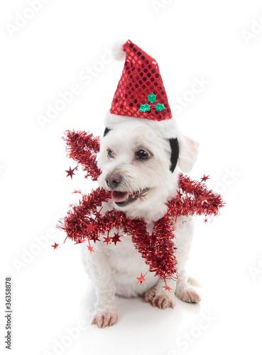 poster of Festive pooch
