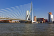 Erasmus Bridge at Rotterdam