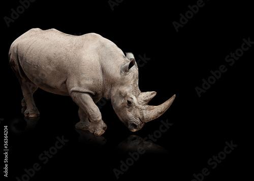 Papiers peints Rhino rhinoceros
