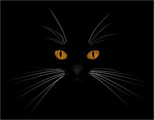Augen in der Nacht