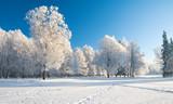 Fototapety Winter park in snow