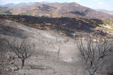 Burned land