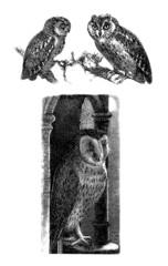 3_Owls