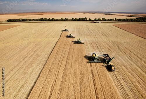 Leinwanddruck Bild Aerial View of Harvest
