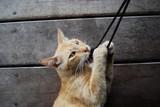 gatto - cat- gato poster