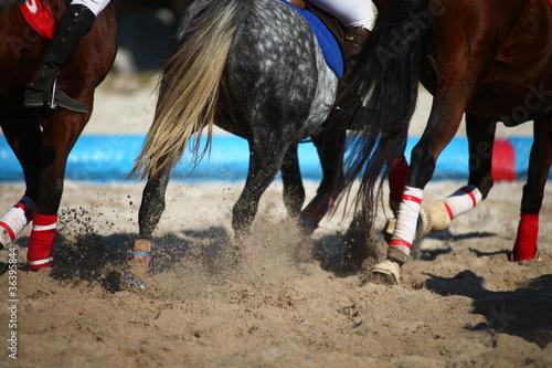 chevaux au galop