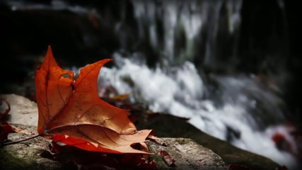 Autumn Waterfall Seamless Loop