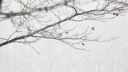 Winter snow background loopable