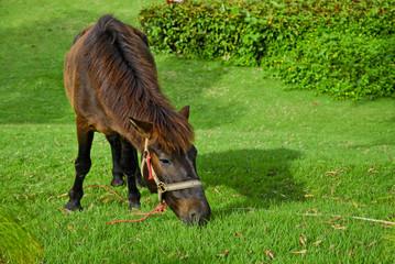 Horse eat grasses