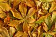 Bunte Kastanienblätter