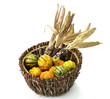 Decorative Squash And Colorful Corn