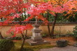Red maples in a japanese garden (fall, Kyoto)