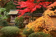 Red maple trees in a japanese garden (Kyoto)