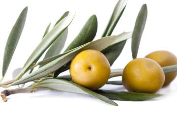aceitunas verdes en la rama aislada