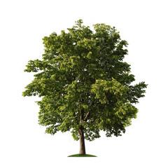 Tree over white