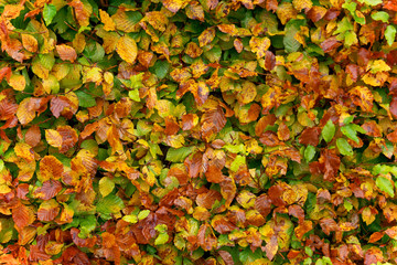 Autmn leafs