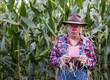 surprised scarecrow has pink slip in corn field