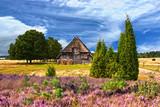 Fototapety Heideblüte in der Lüneburger Heide