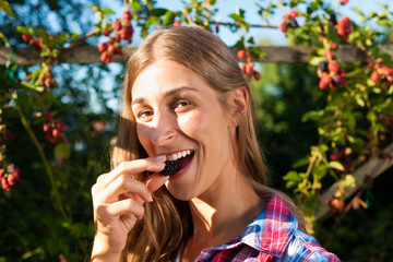 Frau beim Beeren pflücken im Garten