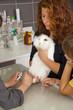 beim Tierarzt - dem Hasen werden die  Krallen geschnitten