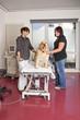 beim Tierarzt - Hund wird auf Behandlungstisch hochgefahren