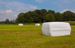 Hay bales in the field waiting for transport