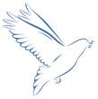 Taube blau mit Zweig im Schnabel auf weißem Hintergrund