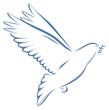 Taube zweifarbig mit Zweig auf weißem Hintergrund