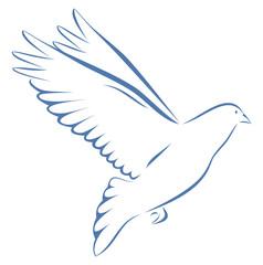 Taube blau auf weißem Hintergrund Vogel