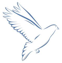 Taube zweifarbig auf weißem Hintergrund Vogel