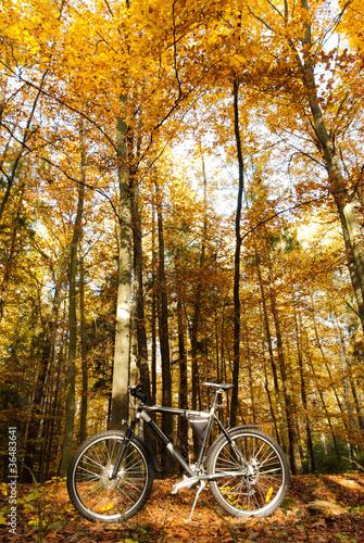 Fototapeta bike