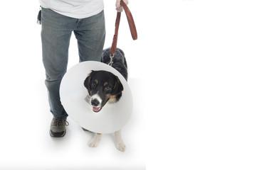 Man walking dog in cone