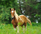 Beautiful Horse in a Green Meadow in sunny day