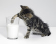 kitten fishing for milk