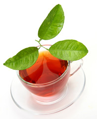 Tea and green leaf